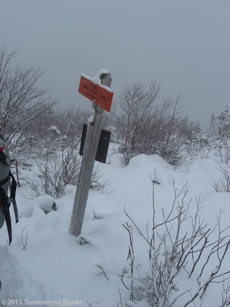 Right at treeline, orange signs indicate the Lion's Head Winter Route.