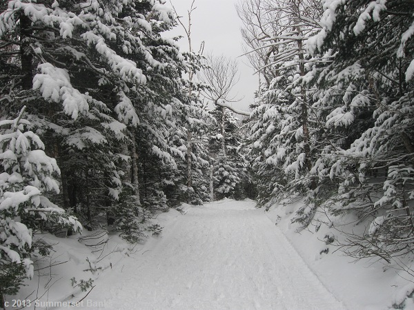 Tuckerman Ravine Trail, nice and wide, with fresh snow.