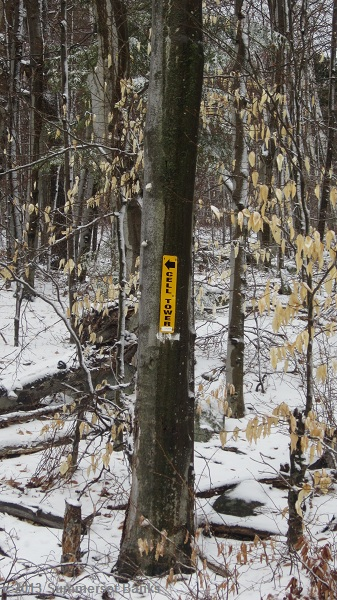 The next left, marked by a white arrow and sign on a tree.  The service road continues up to the tower from here.