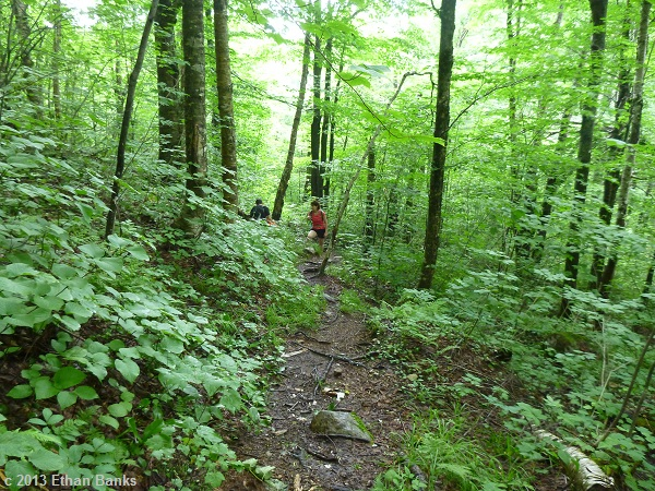Taking a break and looking back down the trail toward where we stopped.  Lots of height of summer greenery!