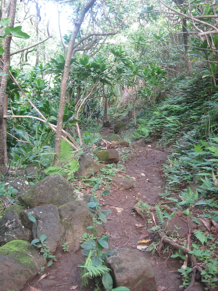 Typical trail in the first six or so miles of trail.