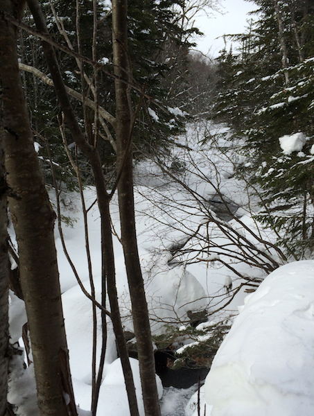 Looking up the Rocky Branch from the trail, which parallels and crosses it several times.
