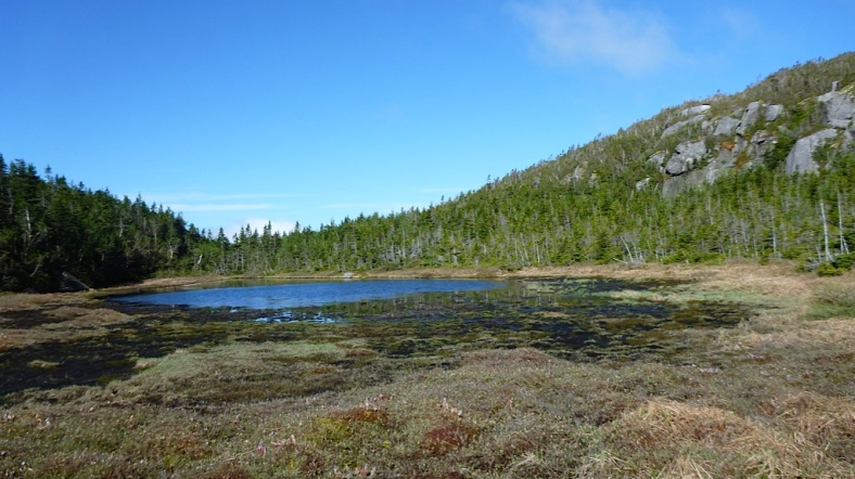 Harrington Pond, a nice little pond near the last steep section to South Kinsman.