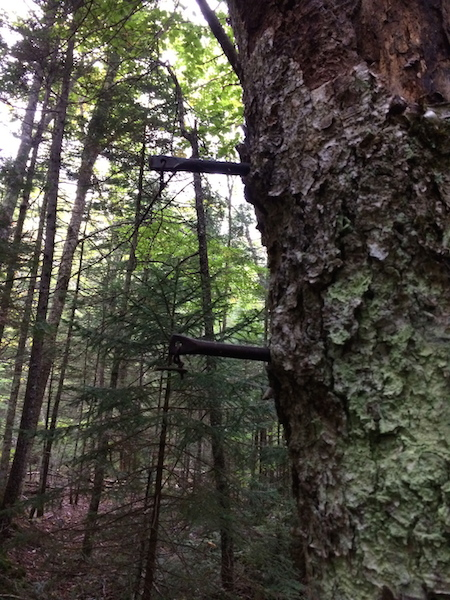 Some metal relics from bygone years in a tree at the Carrigain Notch and Desolation junction.