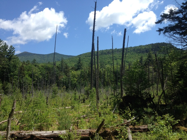 A view to the Bonds from Franconia Brook Trail.