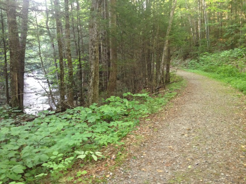 Logging road in the early part of Smarts Brook Trail.