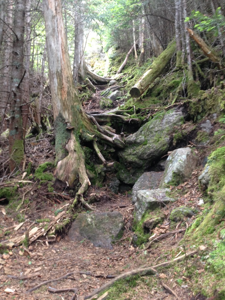 Typical trail for this section. Roots, rocks, and no obvious footbed. Whee!
