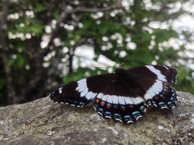 Butterfly posed for me along Castle Trail.