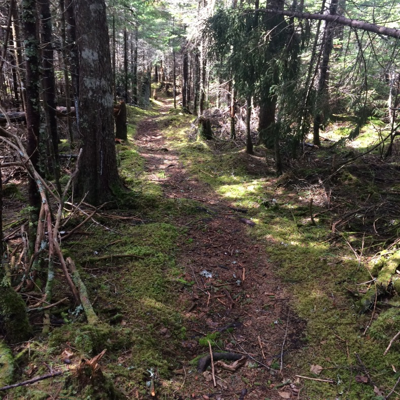 Easy walking on the Rim Trail through mossy forest.